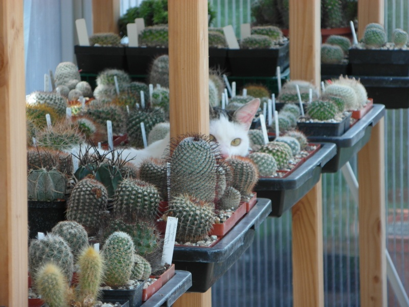 Cacti and Sukkulent in Köln, every day new flowers in the greenhouse Part 76 Bild1347