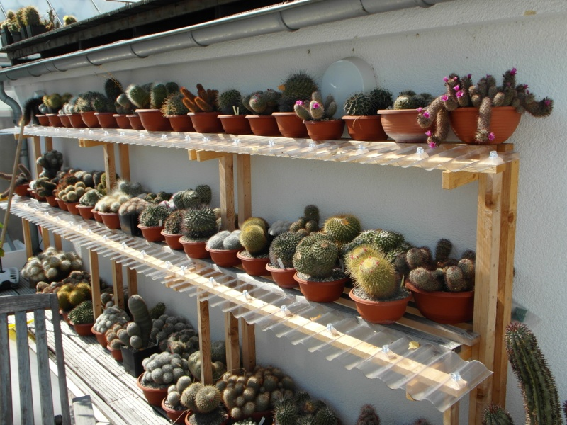 Cacti and Sukkulent in Köln, every day new flowers in the greenhouse Part 78 Bild1437