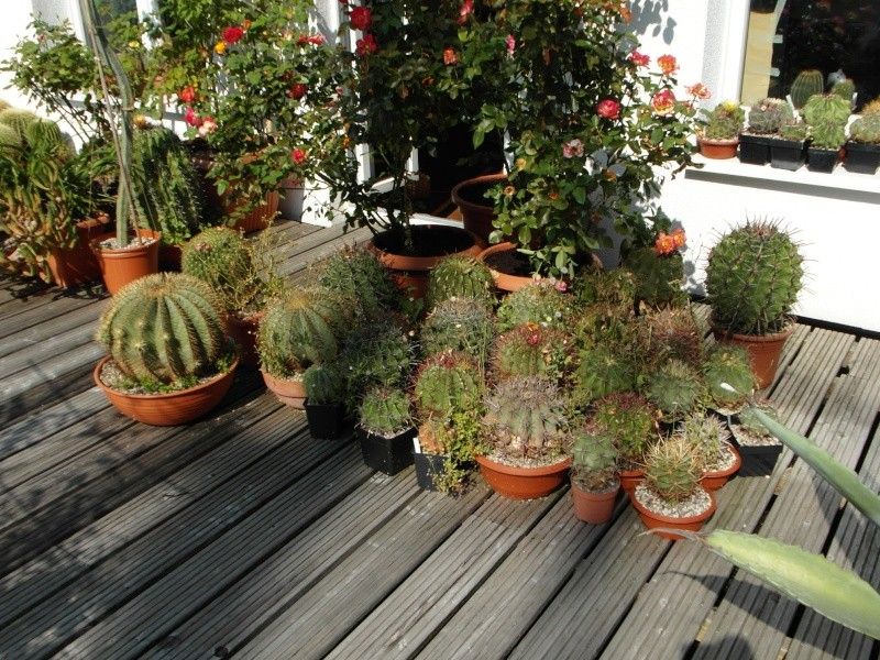 Cacti and Sukkulent in Köln, every day new flowers in the greenhouse Part 78 Bild1438