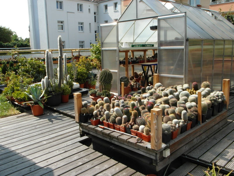 Cacti and Sukkulent in Köln, every day new flowers in the greenhouse Part 78 Bild1440