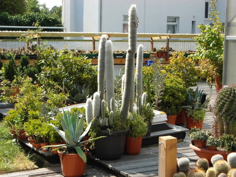 Cacti and Sukkulent in Köln, every day new flowers in the greenhouse Part 78 Bild1443