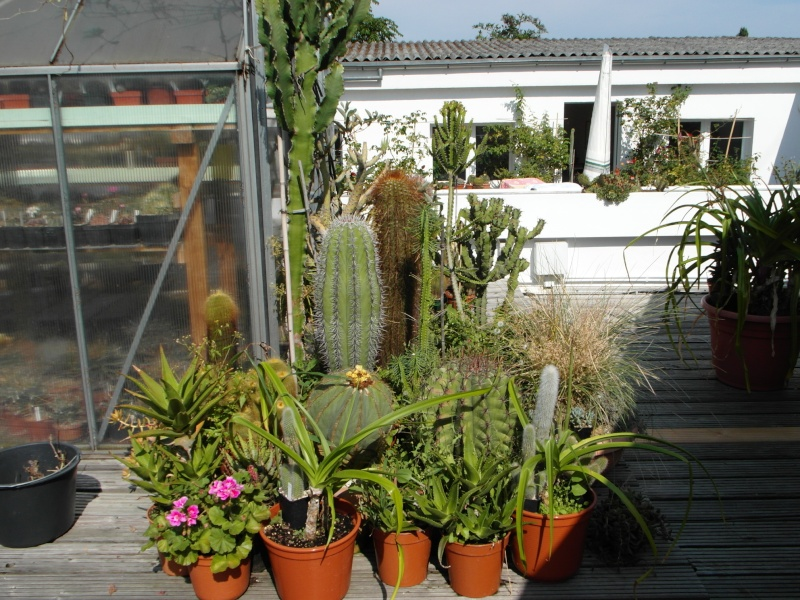 Cacti and Sukkulent in Köln, every day new flowers in the greenhouse Part 78 Bild1444