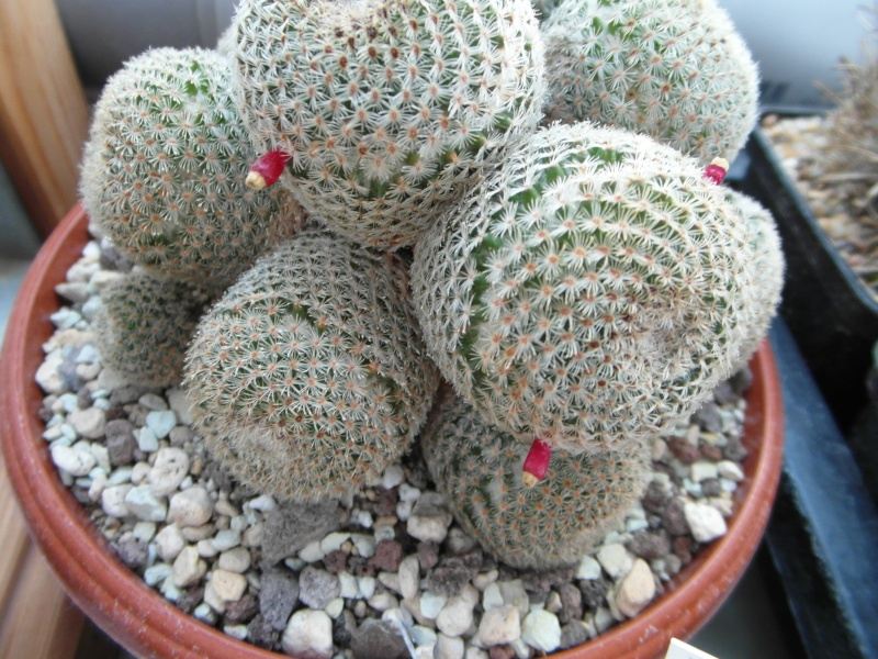 Cacti and Sukkulent in Köln, every day new flowers in the greenhouse Part 79 Bild1540