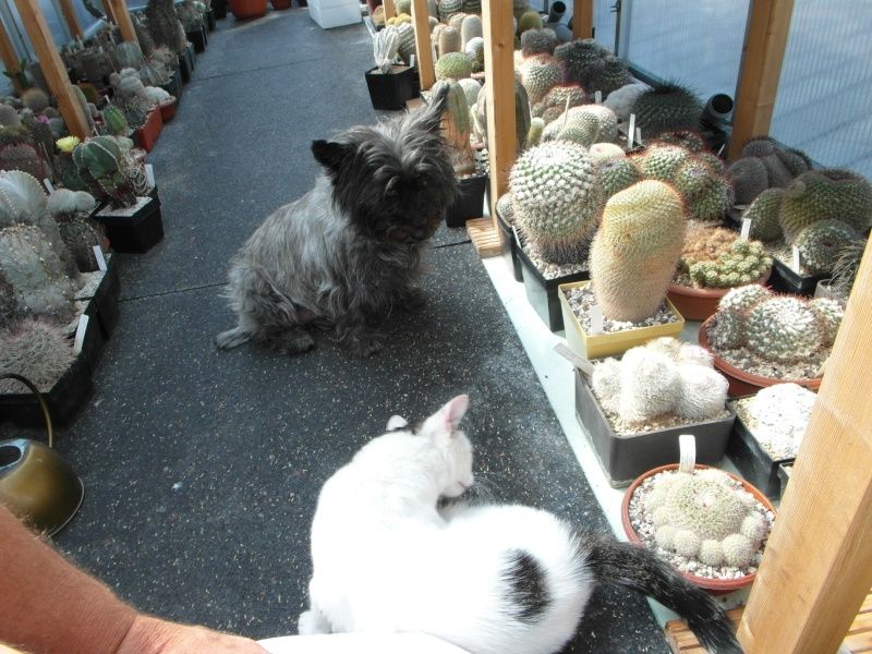 Cacti and Sukkulent in Köln, every day new flowers in the greenhouse Part 79 Bild1558