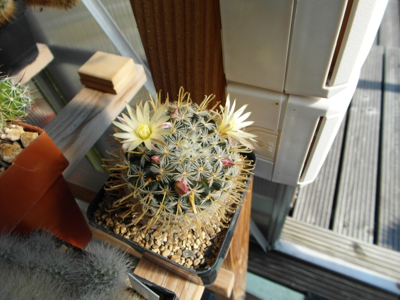 Cacti and Sukkulent in Köln, every day new flowers in the greenhouse Part 79 Bild1586