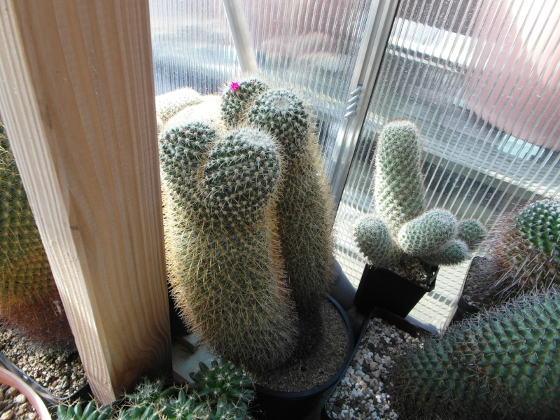 Cacti and Sukkulent in Köln, every day new flowers in the greenhouse Part 80 Bild1663