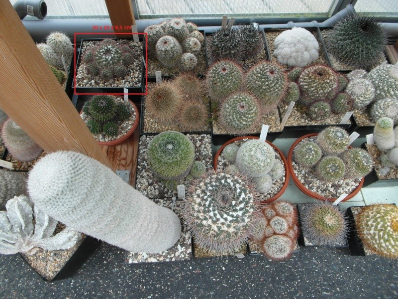 Cacti and Sukkulent in Köln, every day new flowers in the greenhouse Part 50 Bild1816
