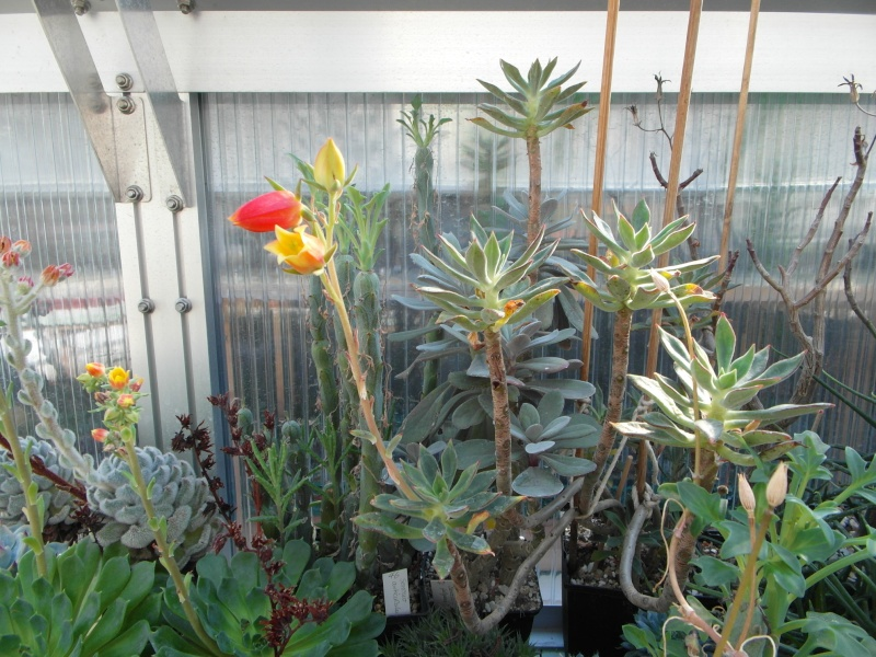 Cacti and Sukkulent in Köln, every day new flowers in the greenhouse Part 82 Bild1862
