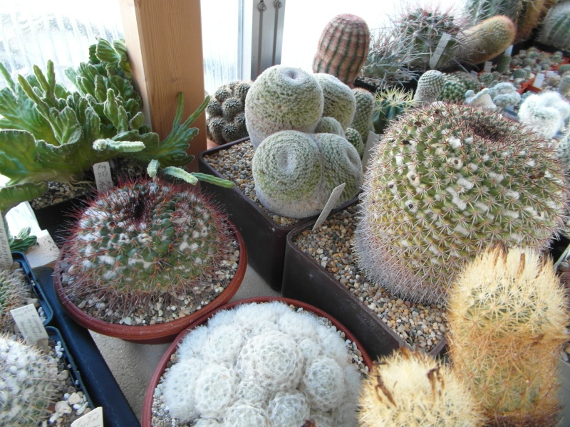 Cacti and Sukkulent in Köln, every day new flowers in the greenhouse Part 82 Bild1876