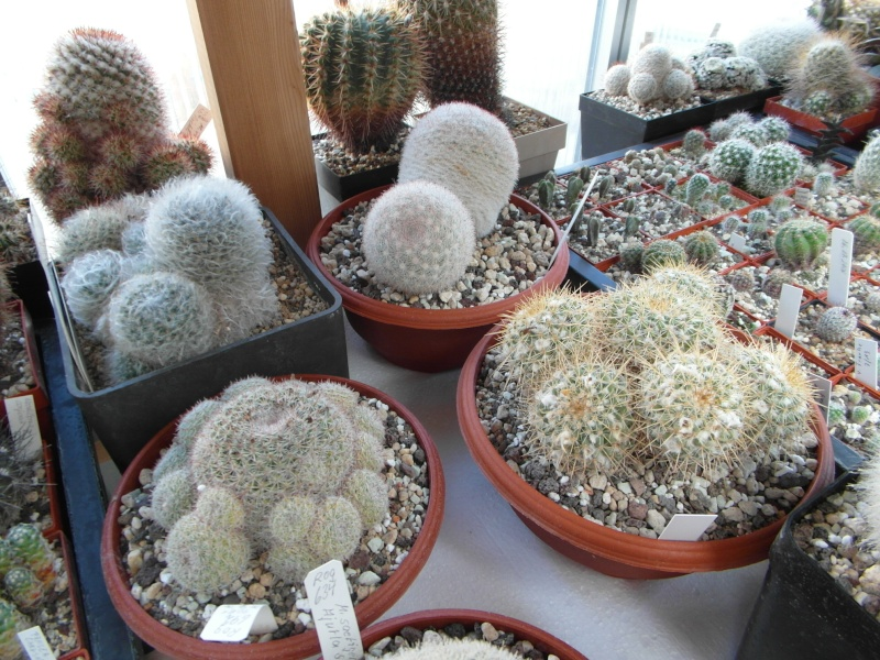 Cacti and Sukkulent in Köln, every day new flowers in the greenhouse Part 82 Bild1878