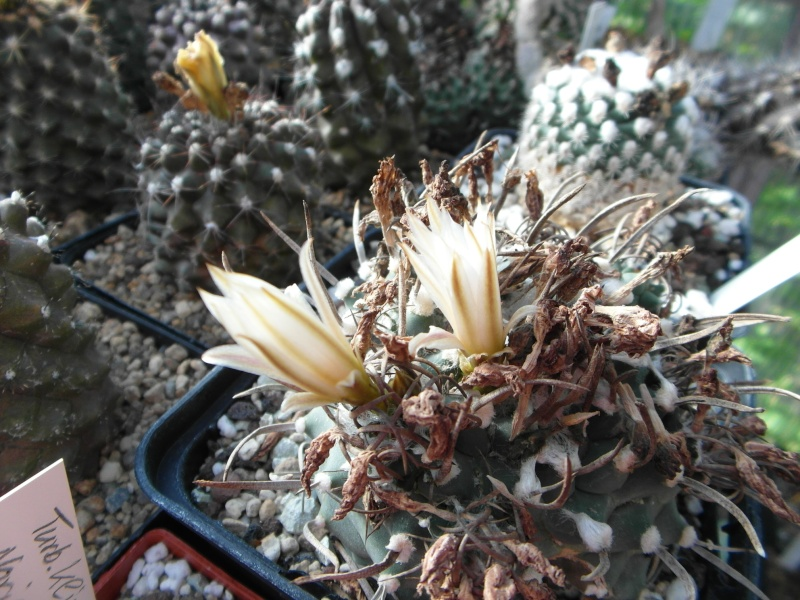 Cacti and Sukkulent in Köln, every day new flowers in the greenhouse Part 83 Bild2034
