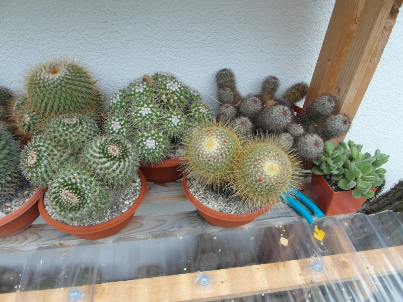 Cacti and Sukkulent in Köln, every day new flowers in the greenhouse Part 84 Bild2075