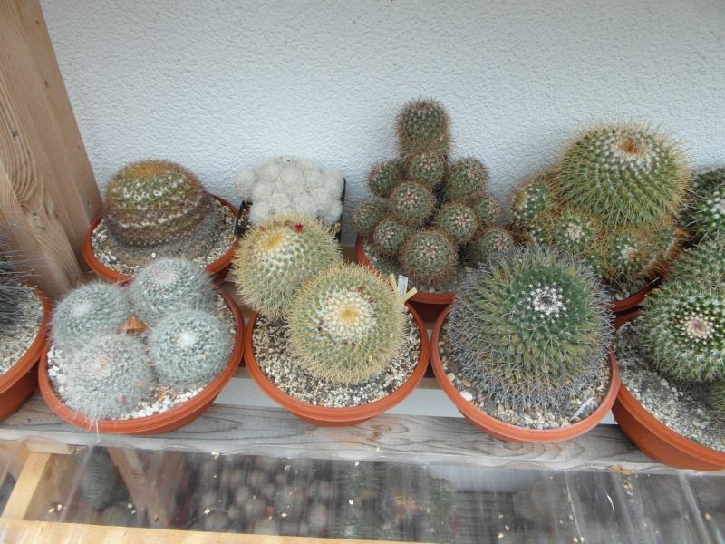 Cacti and Sukkulent in Köln, every day new flowers in the greenhouse Part 84 Bild2076
