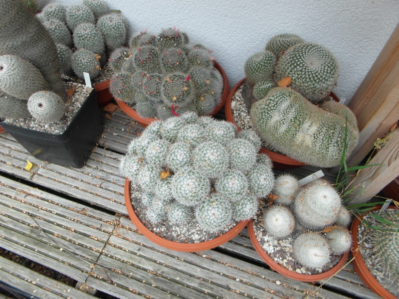 Cacti and Sukkulent in Köln, every day new flowers in the greenhouse Part 84 Bild2079