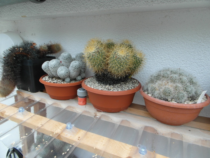 Cacti and Sukkulent in Köln, every day new flowers in the greenhouse Part 84 Bild2083