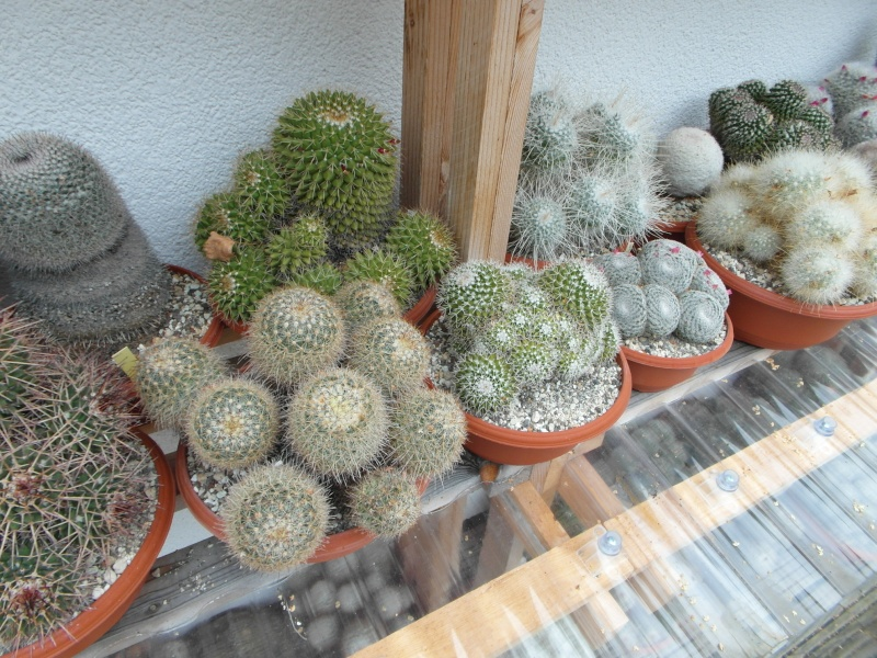 Cacti and Sukkulent in Köln, every day new flowers in the greenhouse Part 84 Bild2084