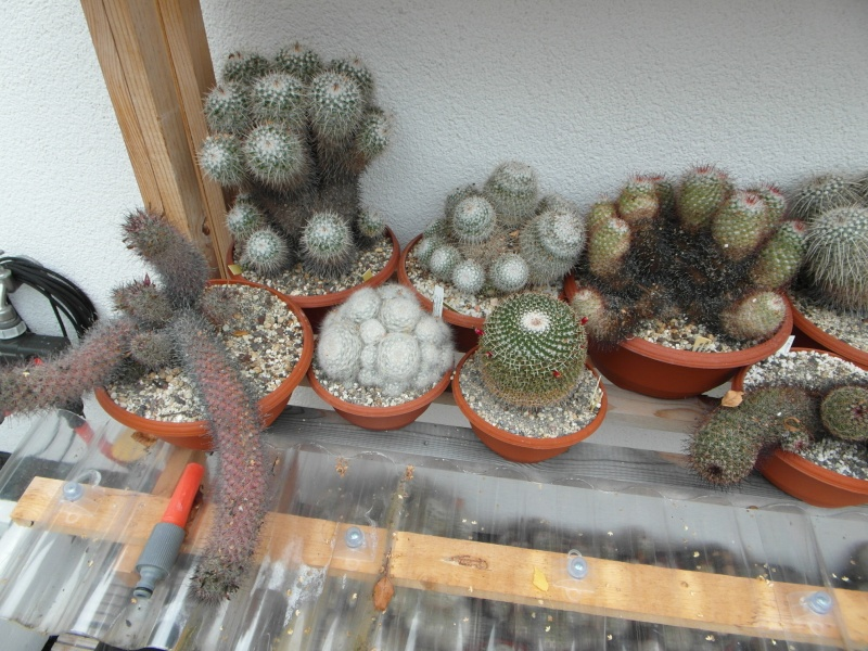 Cacti and Sukkulent in Köln, every day new flowers in the greenhouse Part 84 Bild2085