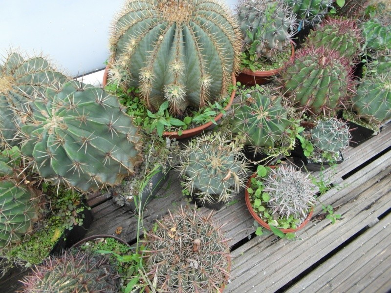 Cacti and Sukkulent in Köln, every day new flowers in the greenhouse Part 84 Bild2094