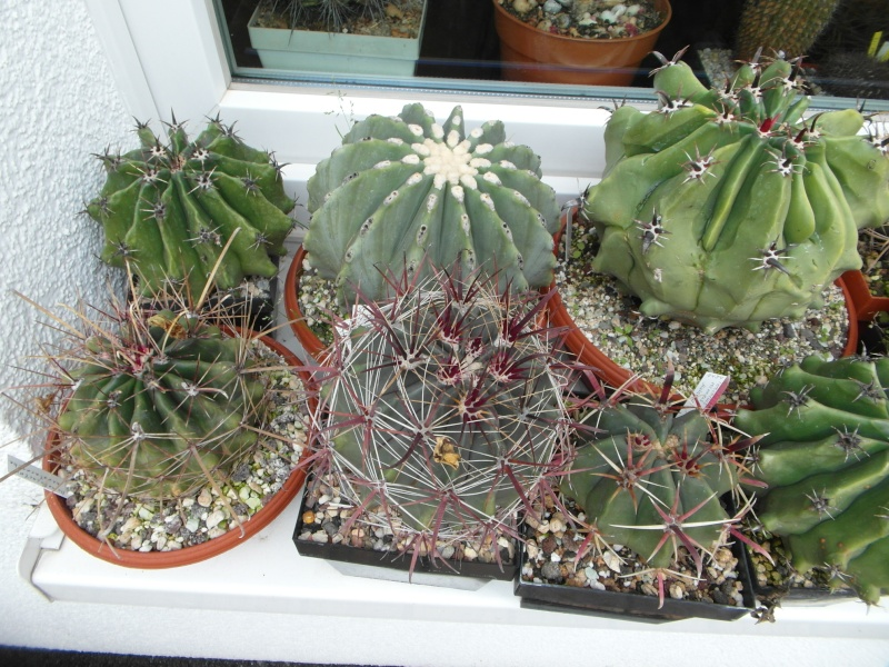 Cacti and Sukkulent in Köln, every day new flowers in the greenhouse Part 84 Bild2096