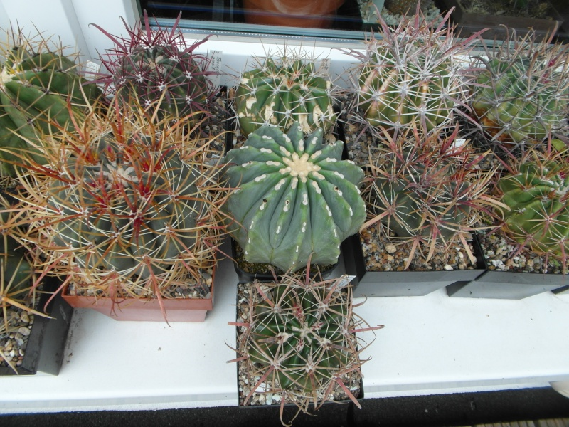 Cacti and Sukkulent in Köln, every day new flowers in the greenhouse Part 84 Bild2097