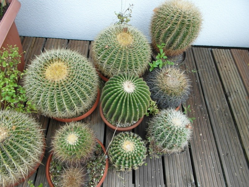 Cacti and Sukkulent in Köln, every day new flowers in the greenhouse Part 84 Bild2099