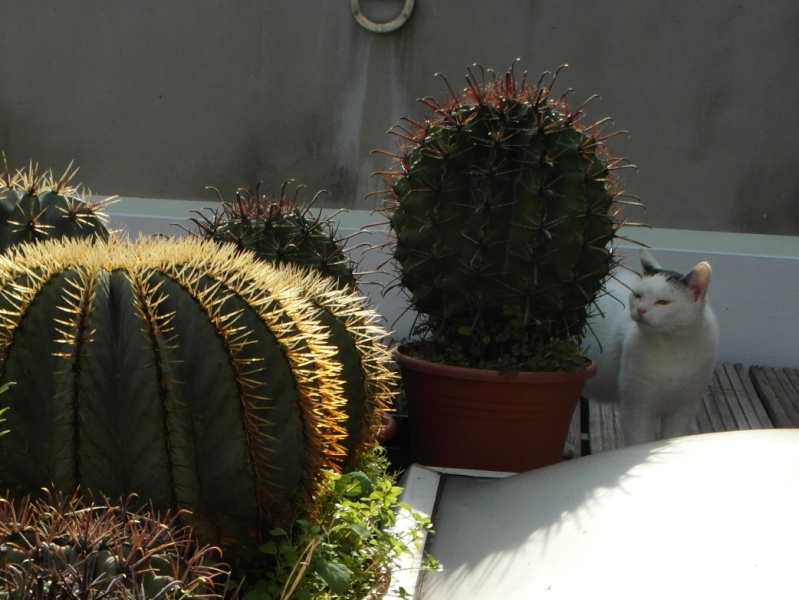 Cacti and Sukkulent in Köln, every day new flowers in the greenhouse Part 85 Bild2186