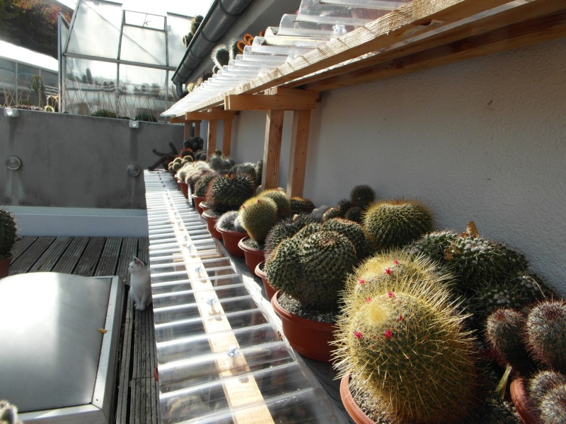 Cacti and Sukkulent in Köln, every day new flowers in the greenhouse Part 85 Bild2188