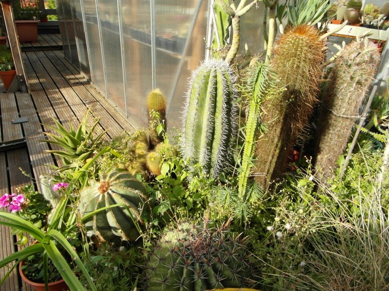 Cacti and Sukkulent in Köln, every day new flowers in the greenhouse Part 85 Bild2204