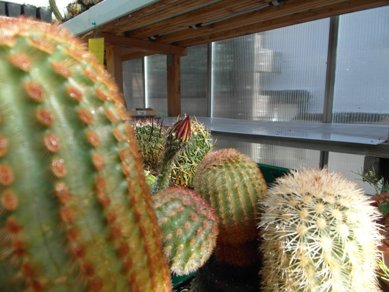 Cacti and Sukkulent in Köln, every day new flowers in the greenhouse Part 86 Bild2218