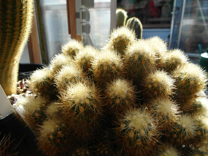Cacti and Sukkulent in Köln, every day new flowers in the greenhouse Part 86 Bild2220