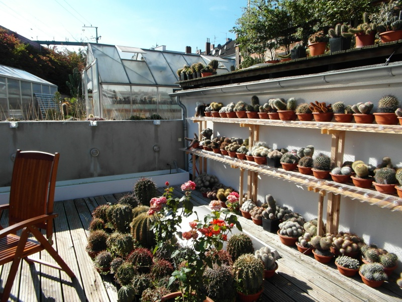 Cacti and Sukkulent in Köln, every day new flowers in the greenhouse Part 86 Bild2222