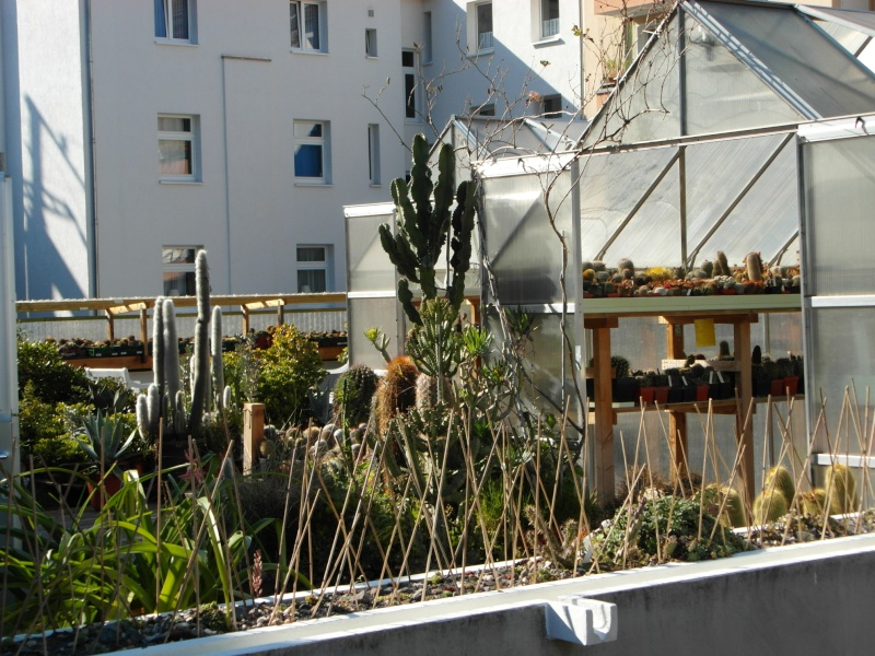 Cacti and Sukkulent in Köln, every day new flowers in the greenhouse Part 86 Bild2223