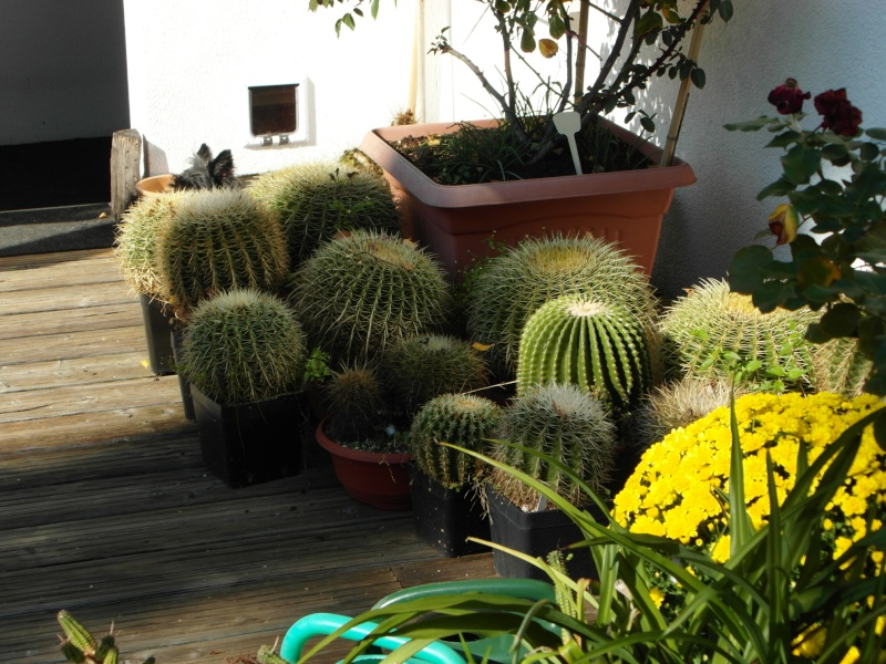 Cacti and Sukkulent in Köln, every day new flowers in the greenhouse Part 86 Bild2224