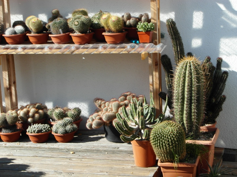Cacti and Sukkulent in Köln, every day new flowers in the greenhouse Part 86 Bild2225