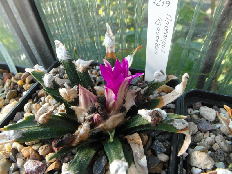 Cacti and Sukkulent in Köln, every day new flowers in the greenhouse Part 87 Bild2304
