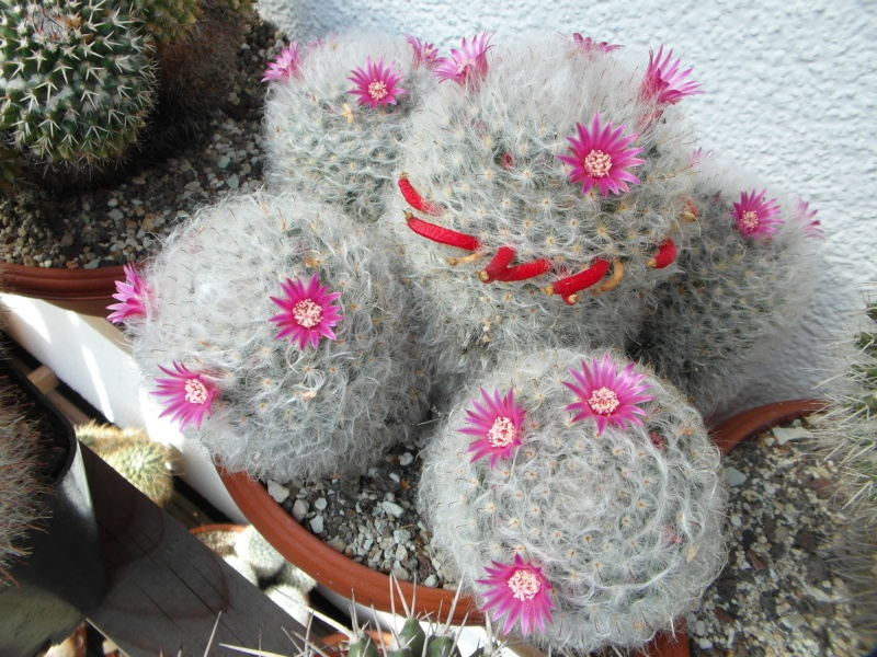 Cacti and Sukkulent in Köln, every day new flowers in the greenhouse Part 87 Bild2333
