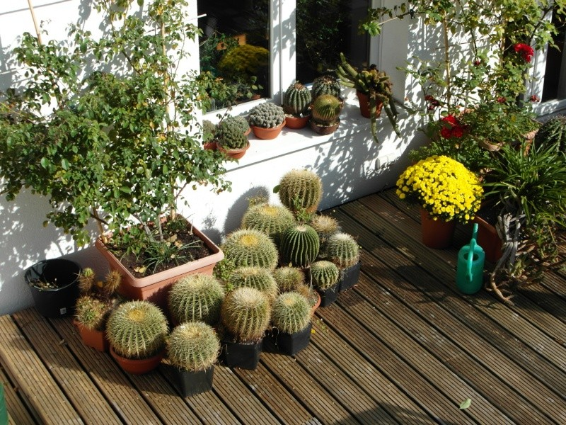 Cacti and Sukkulent in Köln, every day new flowers in the greenhouse Part 87 Bild2339