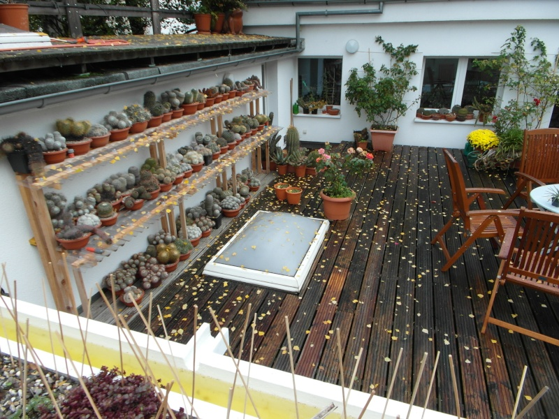 Cacti and Sukkulent in Köln, every day new flowers in the greenhouse Part 88 Bild2453