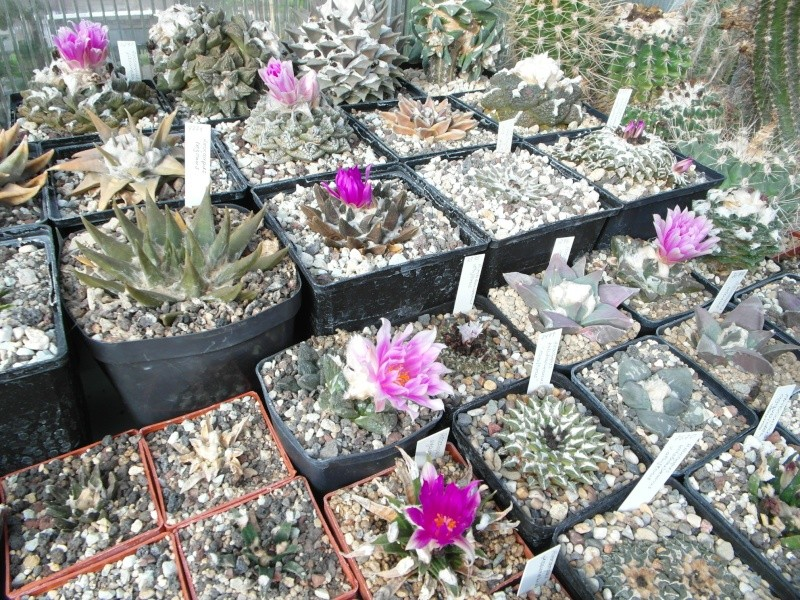 Cacti and Sukkulent in Köln, every day new flowers in the greenhouse Part 89 Bild2481