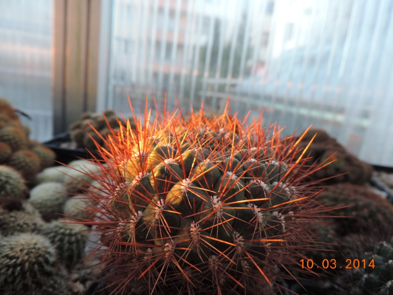 Cacti and Sukkulent in Köln, every day new flowers in the greenhouse Part 89 Bild2545