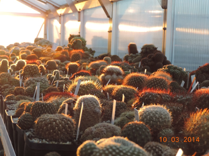 Cacti and Sukkulent in Köln, every day new flowers in the greenhouse Part 89 Bild2547