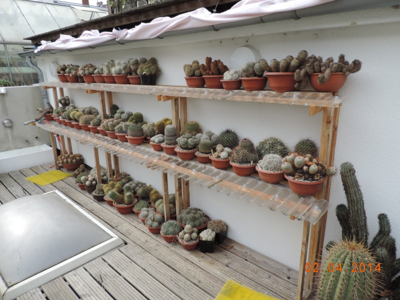 Cacti and Sukkulent in Köln, every day new flowers in the greenhouse Part 89 Bild2594