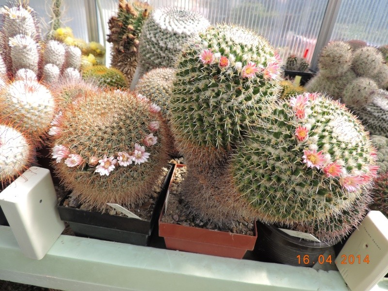 Cacti and Sukkulent in Köln, every day new flowers in the greenhouse Part 91 Bild2670