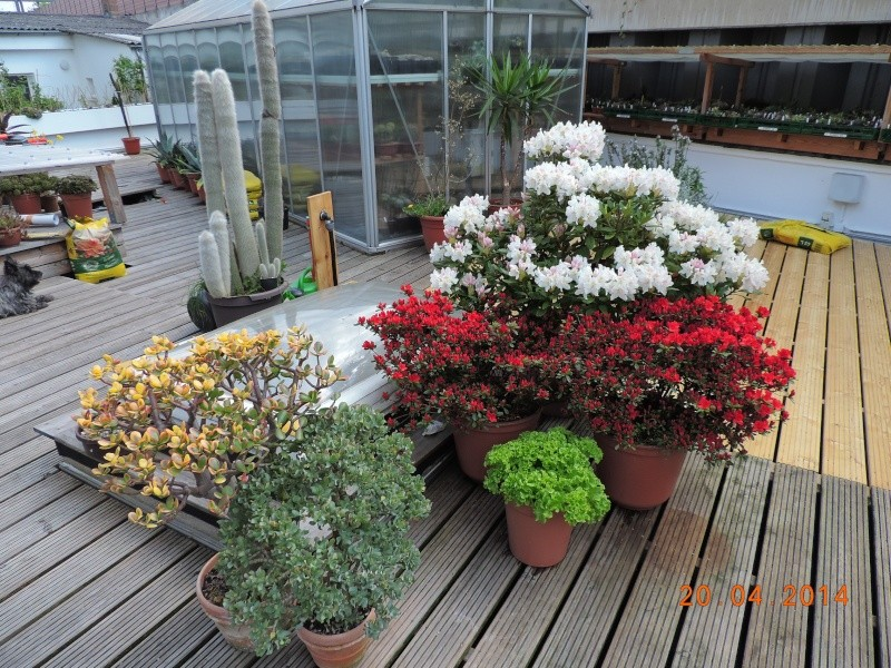 Cacti and Sukkulent in Köln, every day new flowers in the greenhouse Part 92 Bild2785