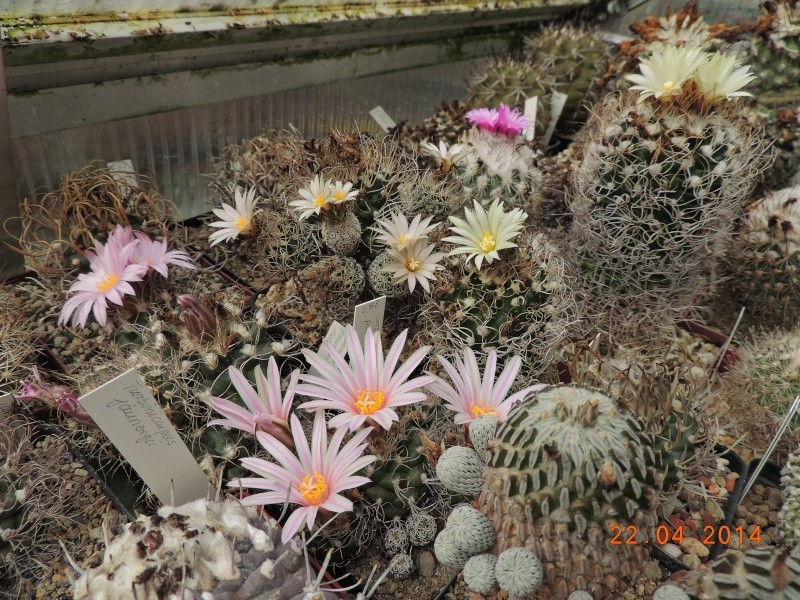 Cacti and Sukkulent in Köln, every day new flowers in the greenhouse Part 92 Bild2796