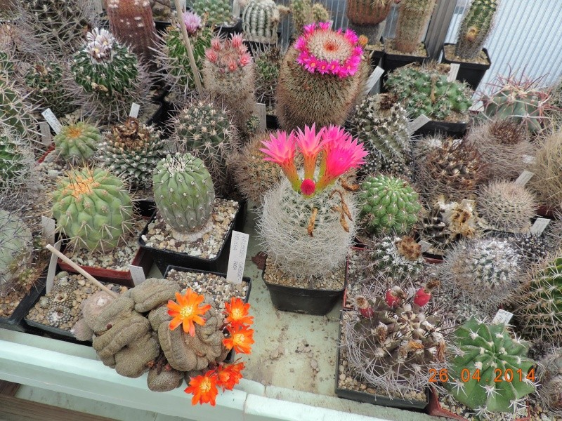 Cacti and Sukkulent in Köln, every day new flowers in the greenhouse Part 93 Bild2863