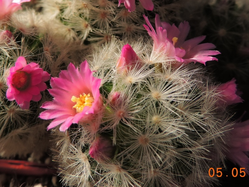 Cacti and Sukkulent in Köln, every day new flowers in the greenhouse Part 94 Bild2924