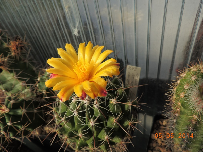Cacti and Sukkulent in Köln, every day new flowers in the greenhouse Part 94 Bild2929