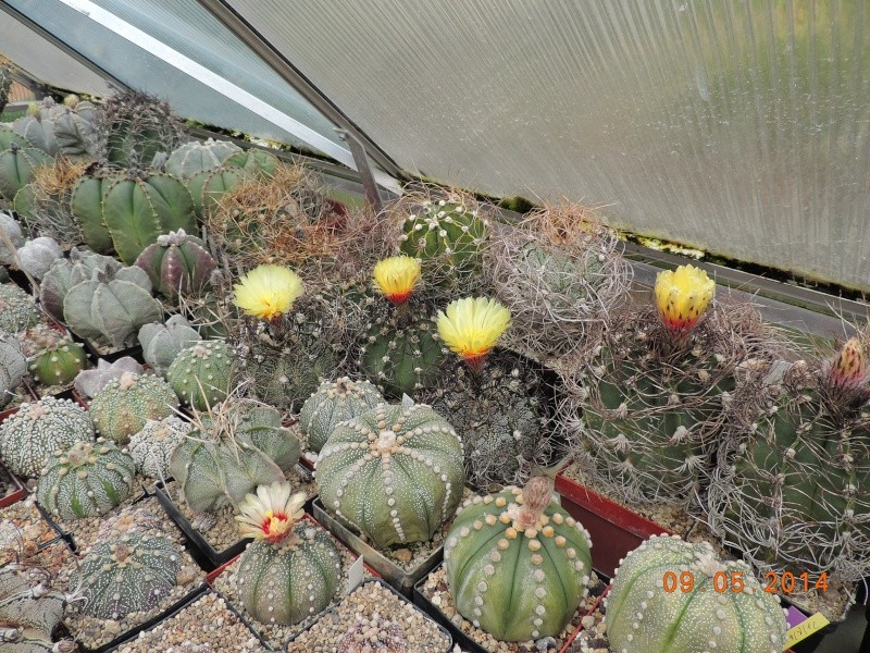Cacti and Sukkulent in Köln, every day new flowers in the greenhouse Part 94 Bild2955