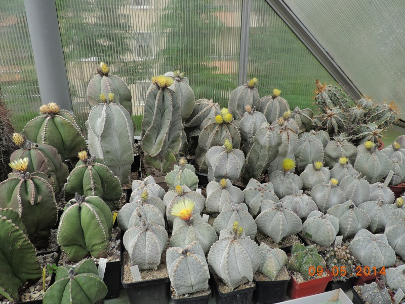 Cacti and Sukkulent in Köln, every day new flowers in the greenhouse Part 94 Bild2956